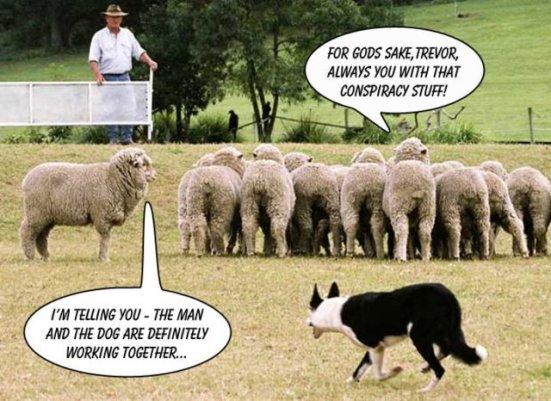 SHEEP AND DOG AND GUY