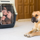 "Animal OWNER'S Rights v Animal ""Rights"" and the Law"