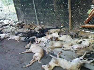 59 dead dogs