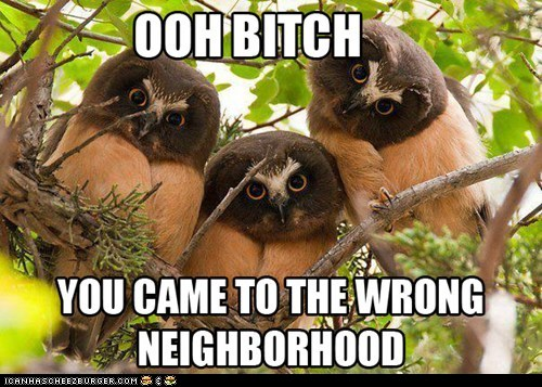 99e9c_funny-animal-captions-animal-capshunz-the-wrong-side-of-the-forest