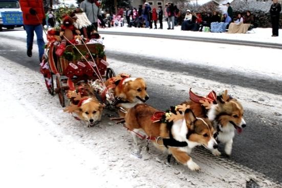 loldog-christmas-corgi-sleigh-3