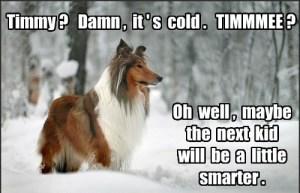 LASSIE SNOW DOG