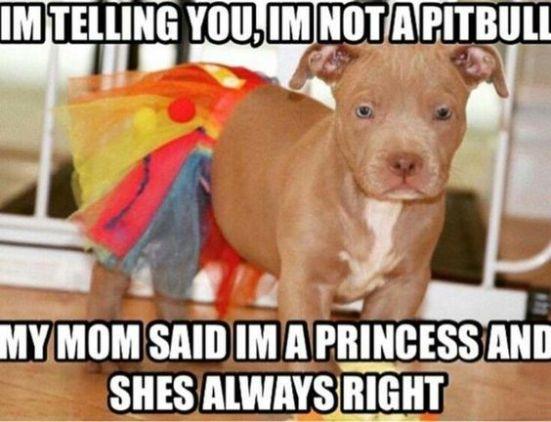 pit-princess